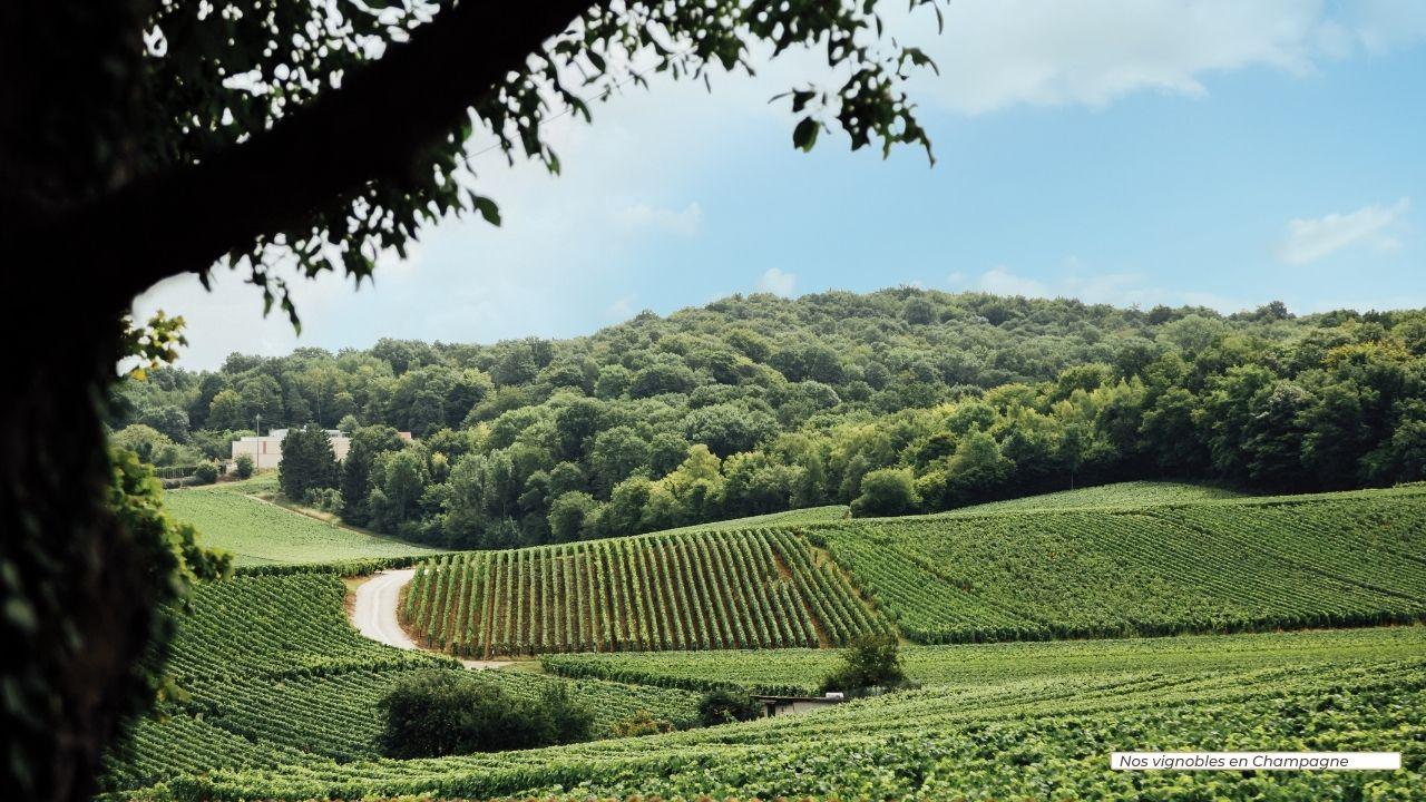 Arvitis_Vignobles_560 ha_Champagne_Canad Duchêne