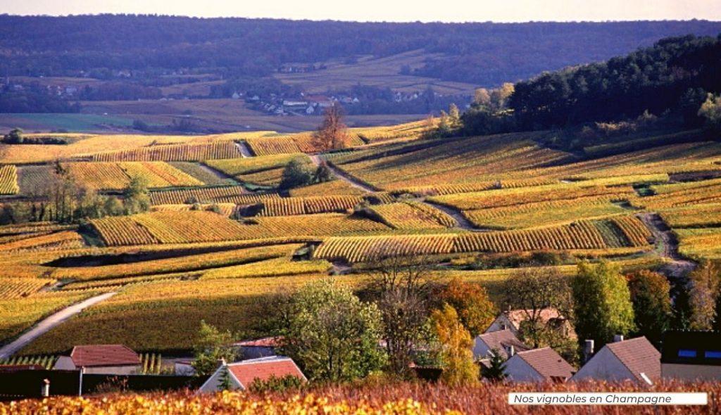 Nos vignobles en Champagne_Arvits